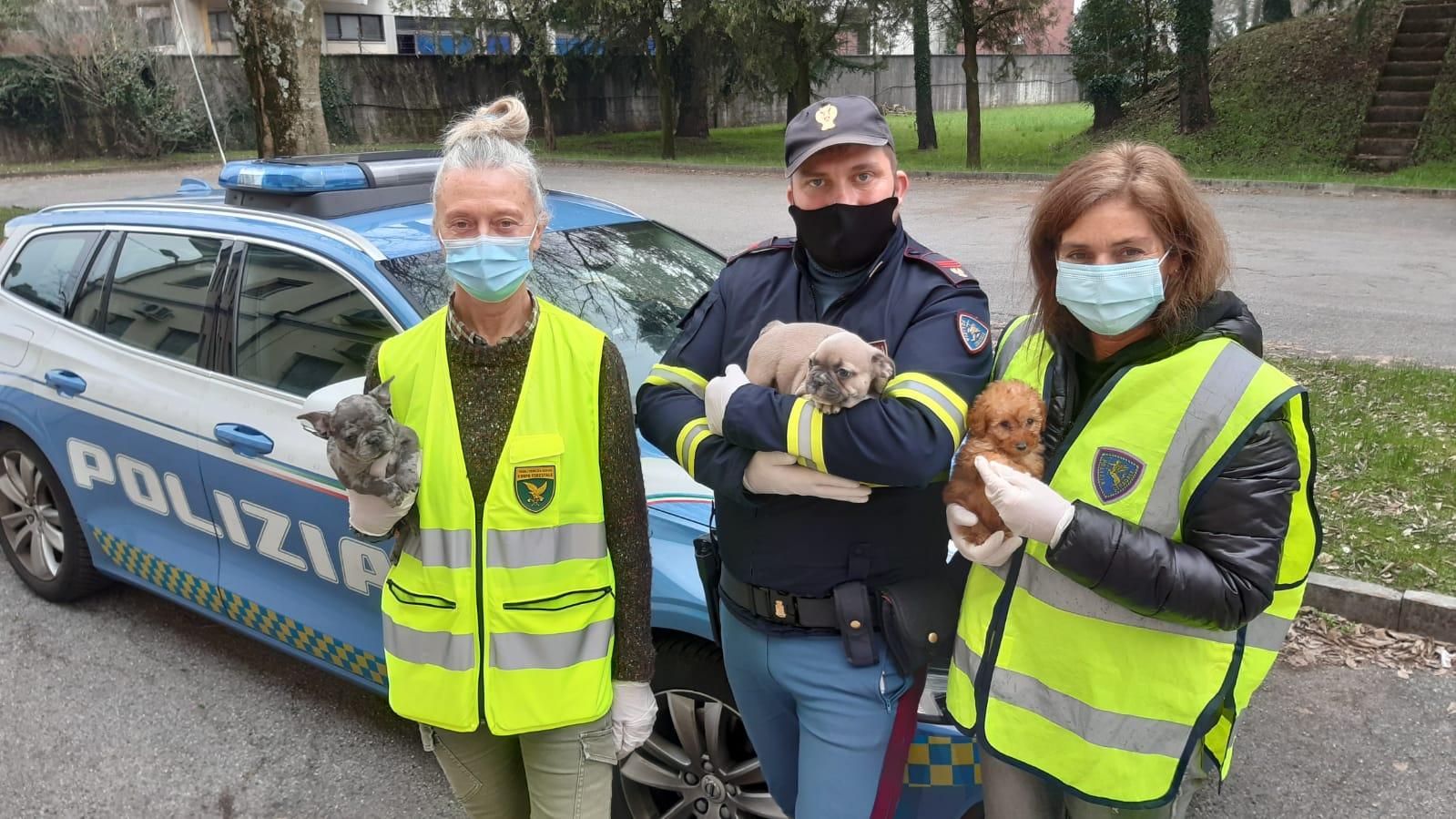 Immagine per Trafficava cuccioli di cane dalla Slovenia, denunciato a Villesse un 46enne