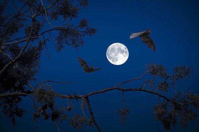 Immagine per Alla scoperta dei pipistrelli in notturna sul Parco dell'Isonzo di Turriaco