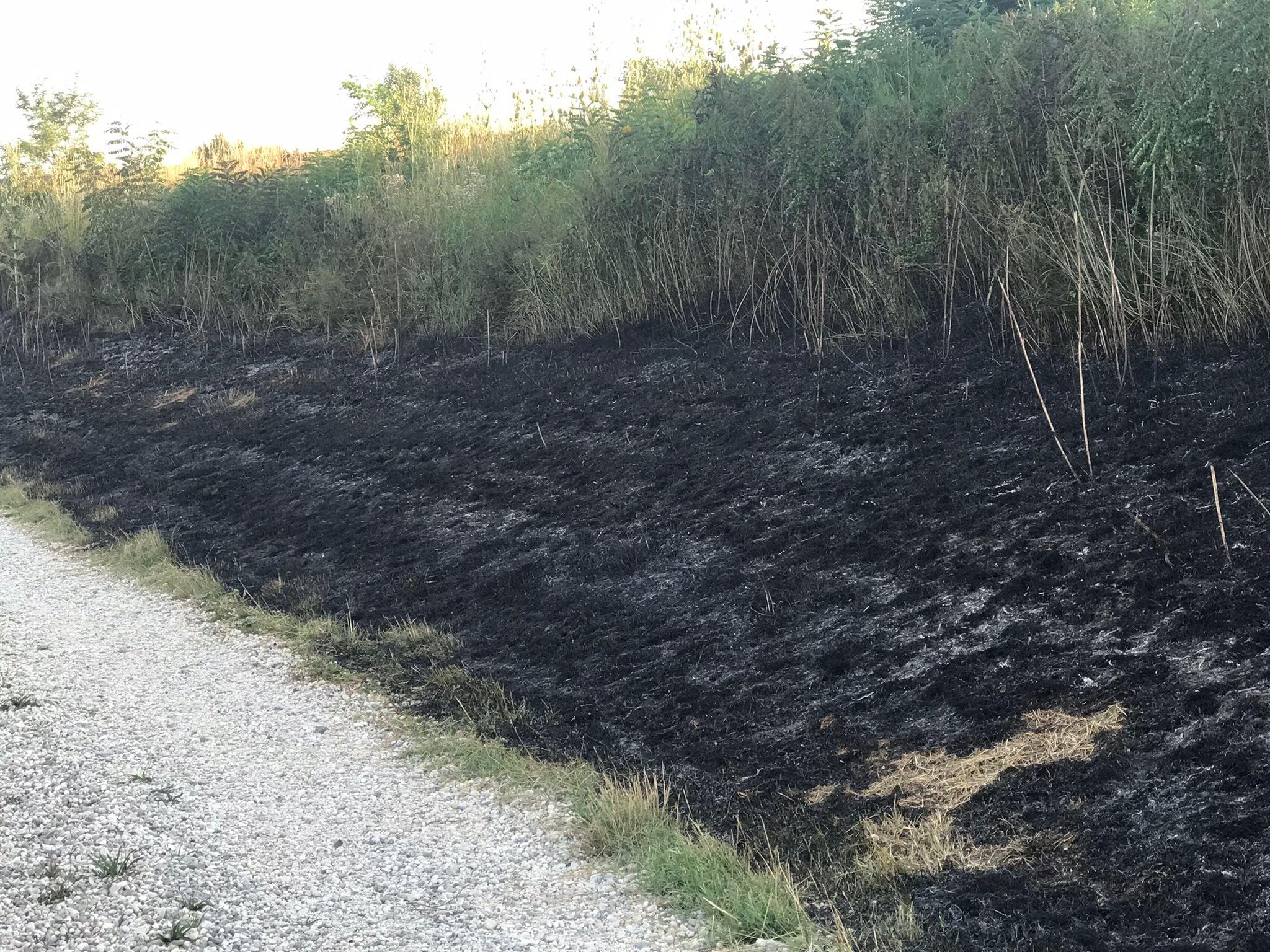 Immagine per Bruciano sterpaglie vicino la ciclabile, fiamme e fumo a Romans d'Isonzo