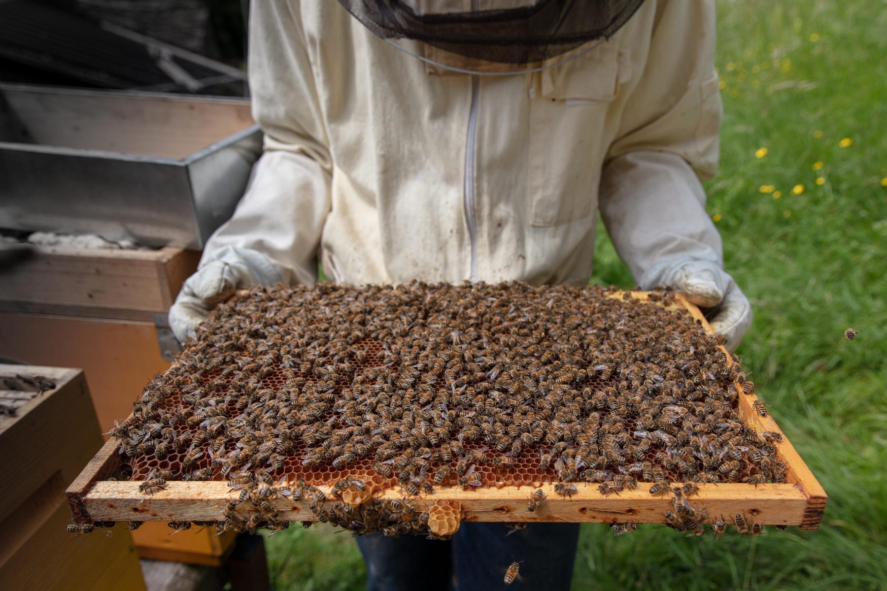 Immagine per Una rete per difendere la natura, Gorizia sogna l'autostrada delle api più lunga d'Italia
